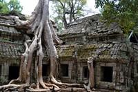 巨大树根与破旧庙宇高清图片下载