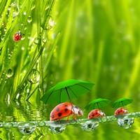 创意水面上撑伞的七星瓢虫高清图片下载