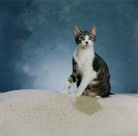 可爱的小花猫高清图片下载