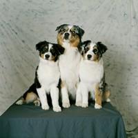 三只可爱小狗高清图片下载
