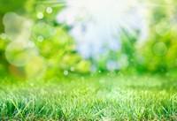 阳光下绿色青青草地高清图片下载