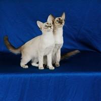 可爱白色小猫咪高清图片下载