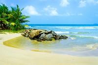 海边椰子林礁石沙滩高清图片下载