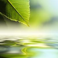 清澈水面上的绿色树叶高清图片下载