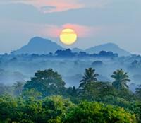 热带森林日落美景高清图片下载