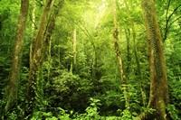 绿色密集的树林高清图片下载