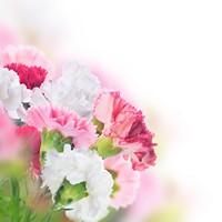 美丽迷人鲜花高清图片下载