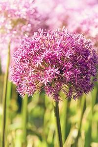 美丽紫色小花特写高清图片下载