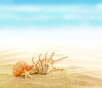 美丽沙滩上的贝壳高清图片下载