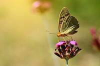 花朵上美丽的蝴蝶高清图片下载