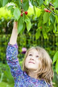 摘樱桃的可爱小女孩高清图片下载