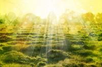 阳光明媚草地草原背景高清图片下载