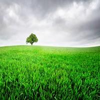 绿色无垠草原上的大树高清图片下载